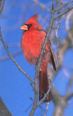 Garden Design should provide for the Birds that help control garden pests