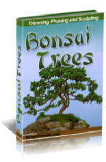 Growing, timming and grooming book on bonzai techniques