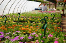 select greenhouse grown plants and flowers