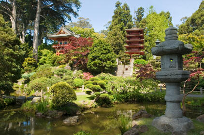 Japanes garden with bonzai specimens