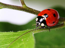 Love the ladybugs - they help control plant pests, too