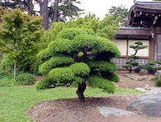 Establishing A Focal Point With A Landscaping Tree