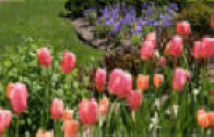 Garden and Landscape directory